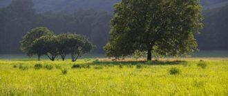 Фото деревьев грецких орехов