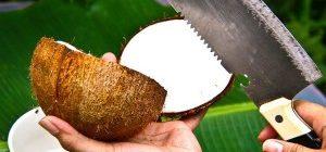 как правильно открыть кокос