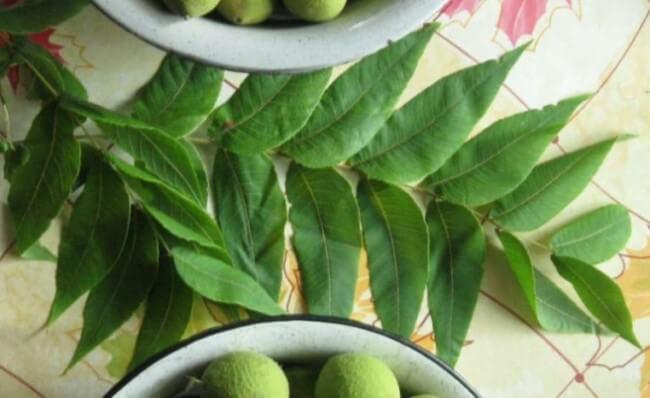 листья чёрного ореха