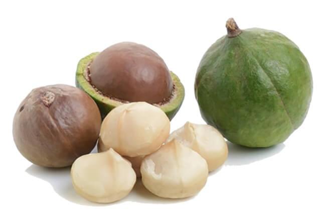 плоды макадамии очищенные