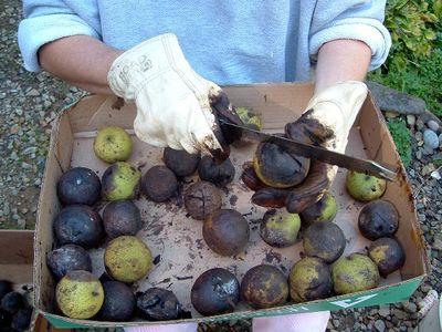 Отмыть руки после зеленых грецких орехов