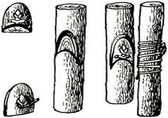 Прививка трубкой и полу-трубкой