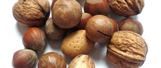 Виды орехов: фото и названия